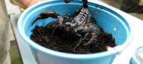 pirate exhibit scorpion