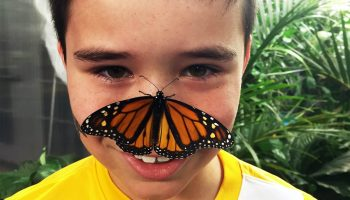 Boy with Monarch-resized