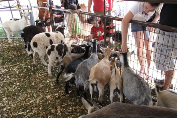 Critterfest Petting Zoo